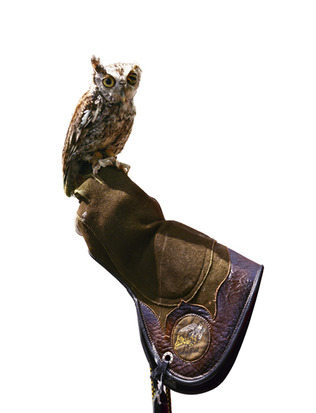 Michelle Elzay Hawke: Sweetie; Rehabilitated Screech Owl, 2007